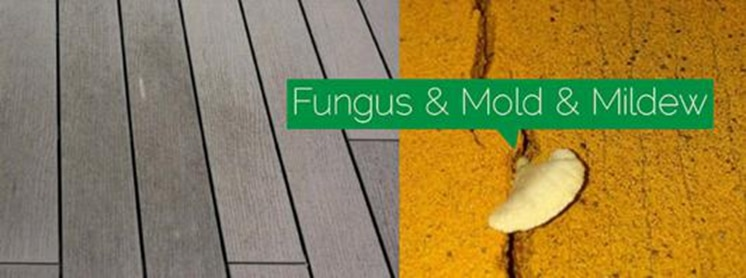 Anit-fungus, mold and mildew composite decks